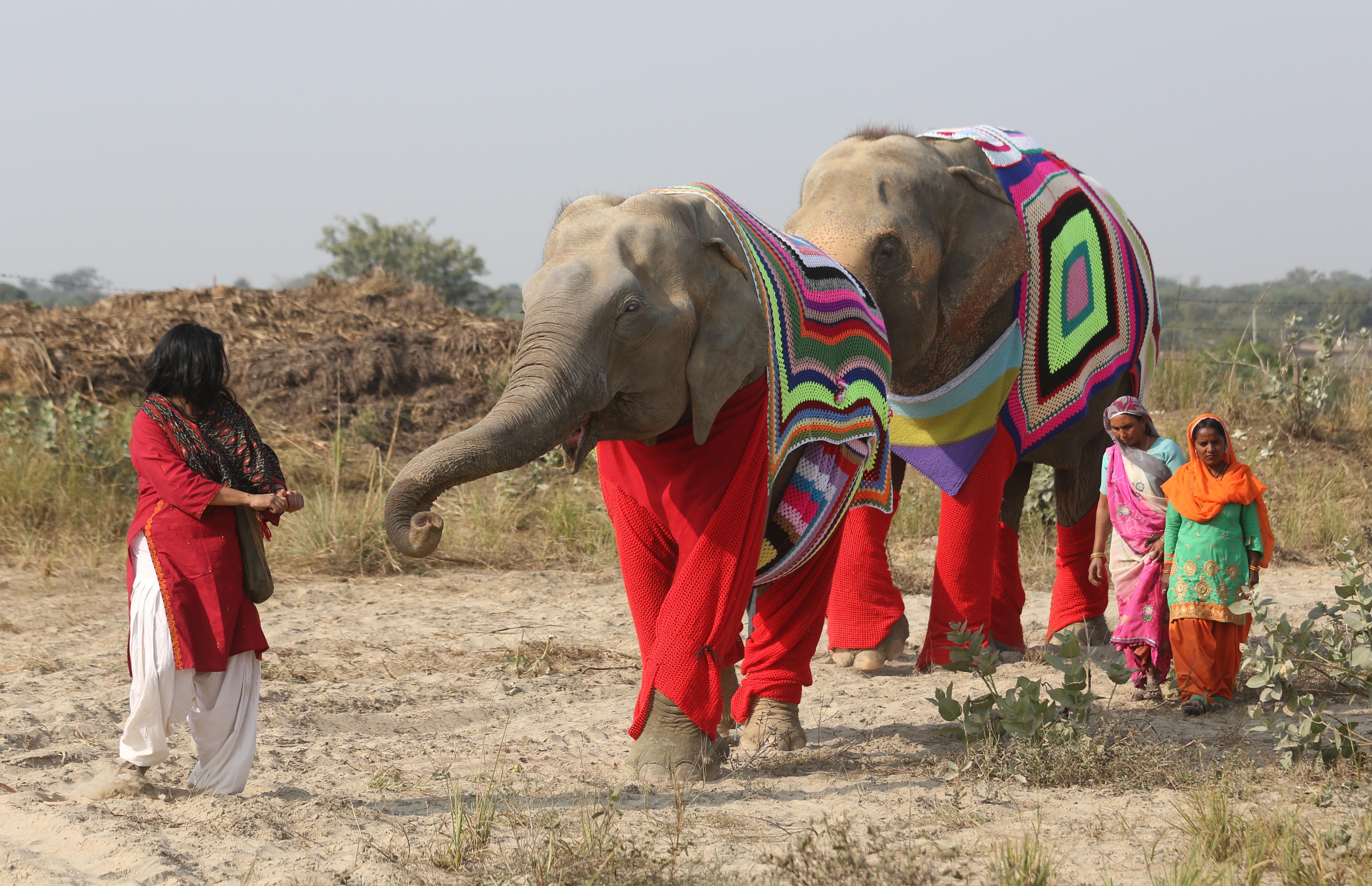 Любопытное об Индии - Страница 2 Ed83fd195882f370ac6fd5206d09d810