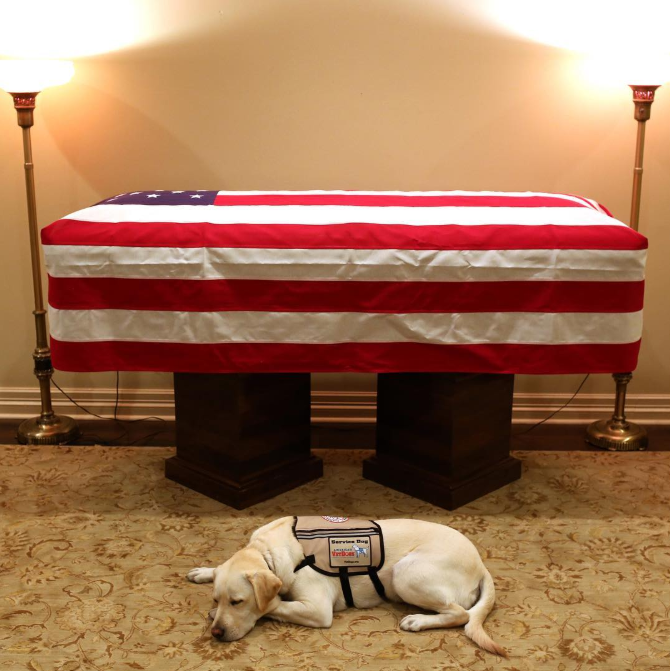 George HW Bush: Former president's service dog honours his master