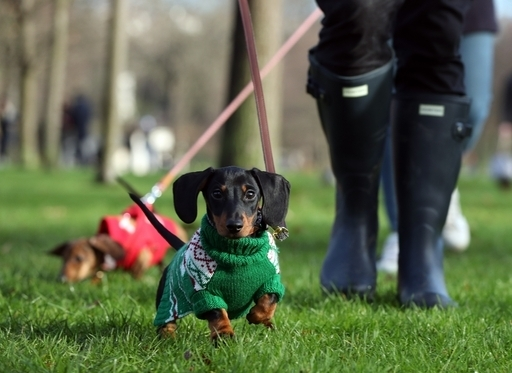 Millennials Treat Pets Like Their 'First Born Baby'. Credit: PA