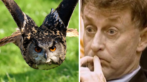 Netflix Provides 'Proof' That Owl Is The 'Real Killer' Behind The Staircase Documentary