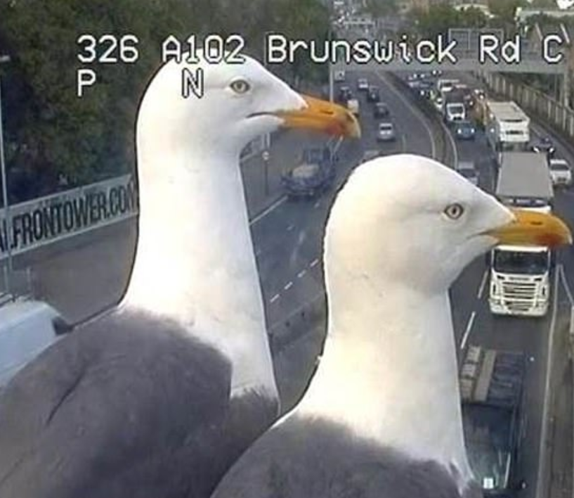 The traffic camera seagulls keeping an eye out