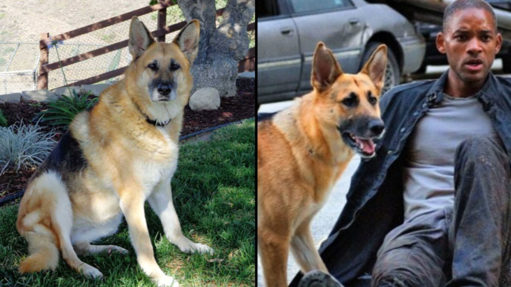Abbey, The Dog From 'I Am Legend', Is Now 13 And Living Her Best Life