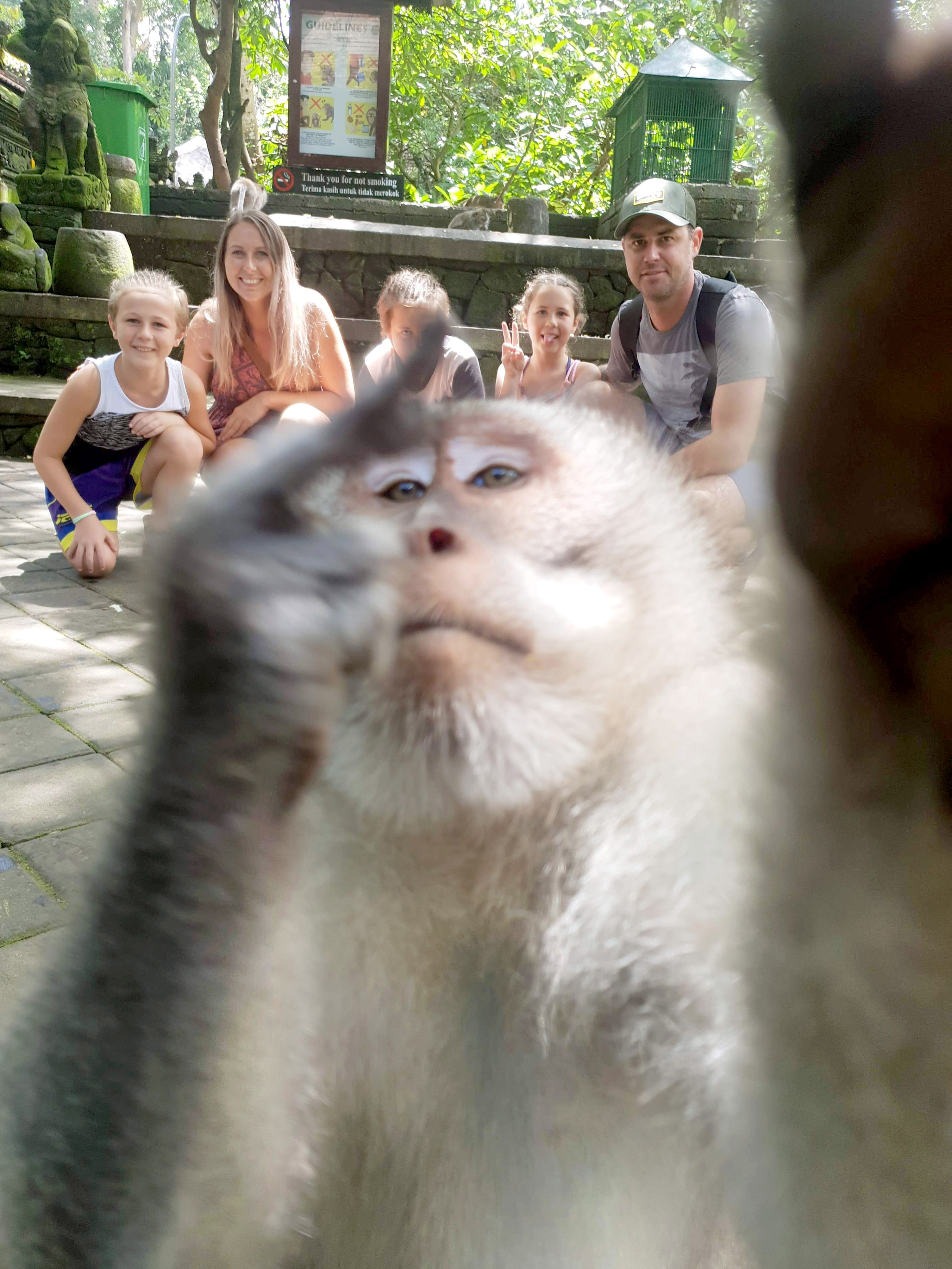 Nothing says taking the piss quite like a monkey giving you the finger. Credit: Storytrender