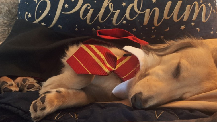 This Talented Dog Responds To 'Harry Potter'-Themed Commands